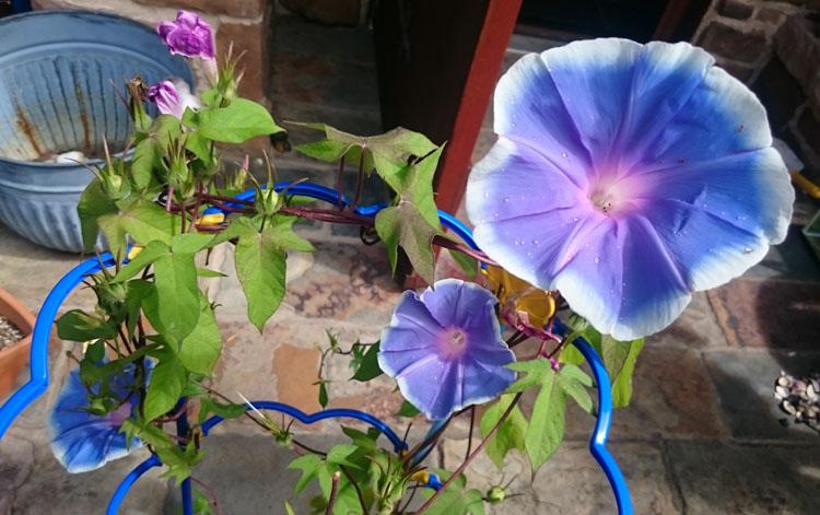 カントリーハウスの花
